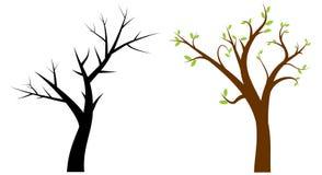 Tree. Arid tree and bud tree Stock Images