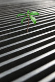 Tree arise form a manhole Stock Photography