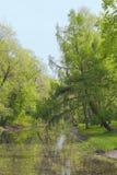 Tree around pond Stock Photography