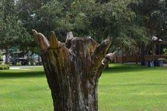 Tree Of Art Royalty Free Stock Photo