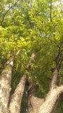 Tree. Art plant growth spurt stock photography