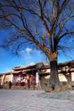 Tree in Asian city square. Tree in square of Asian city with old buildings in background Stock Photography