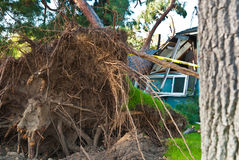 Tree Assasin destroys home Royalty Free Stock Image