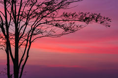 Free Tree At Dawn With Rays Of The Sun Royalty Free Stock Photo - 27608005