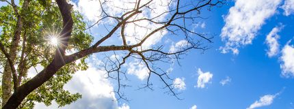 Free Tree At Forest With Sunlight Sunrays Or Sunbeams Star. And Blue Sky White Clouds. Stock Photography - 163355282