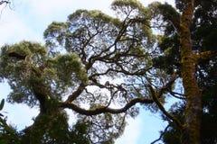 Tree. In Australia Stock Photo