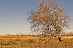 Tree in Autum. On the prairie of Nebraska Stock Photos