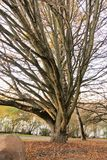 Tree autum Royalty Free Stock Photography