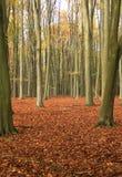 Tree autumn 1 Stock Photos