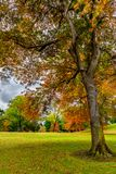 Tree and colors of Autumn royalty free stock photography