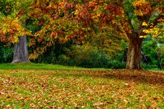 Leaves and trees in Autumn royalty free stock images