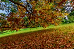 Long branch and leaves in Autumn stock photos