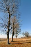 Tree in autumn Royalty Free Stock Photo
