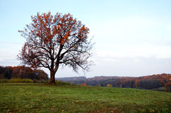 Tree in autumn Stock Photography