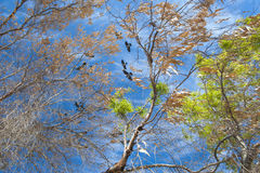 Tree in autumn against blue sky background Royalty Free Stock Photo