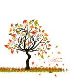 Tree autumn background,  Royalty Free Stock Photography