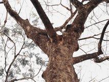 Tree. Autumn, bark, sky, low angle view Stock Photos