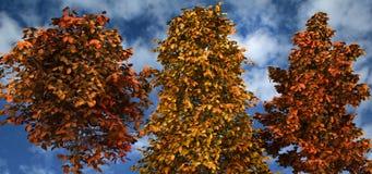 Tree autumn. Royalty Free Stock Photos