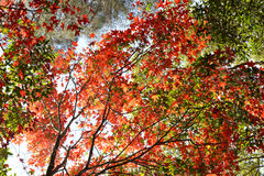 Tree Autumn and bright colors Stock Image