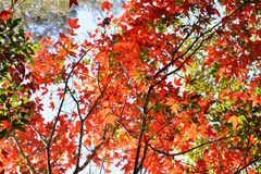 Tree Autumn and bright colors Royalty Free Stock Photo
