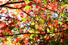 Tree Autumn and bright colors Stock Photos