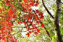 Tree Autumn and bright colors Royalty Free Stock Images