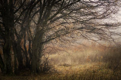 Tree in autumn on colorful meadow Royalty Free Stock Image