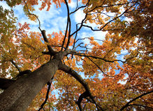 Tree in autumn colors Stock Image