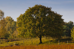 Tree with autumn colors Royalty Free Stock Photo