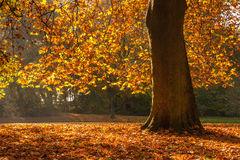 Tree with autumn colors Stock Photography