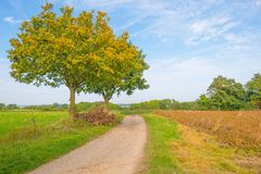 Tree in autumn colors in a meadow in sunlight at fall Royalty Free Stock Images