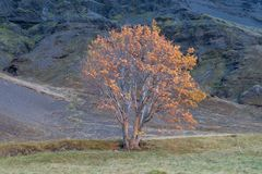 Tree in autumn colors a mountain valley Stock Image