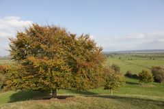 Tree in Fall colours in Somerset England. A tree in autumn colours and the farmland of the Somerset Levels as viewed from Burrow Mump hill in Somerset England Royalty Free Stock Images