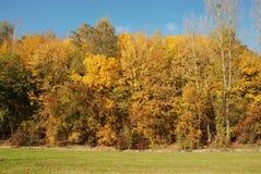 Tree in autumn colours Stock Photos
