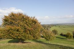 Tree in autumn colours in Somerset England. A tree in autumn colours and the Somerset Levels in Somerset England viewed from the Burrow Mump hill Royalty Free Stock Image