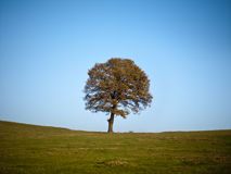 Tree on autumn day Stock Photography