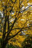 Tree in Autumn or Fall stock photography