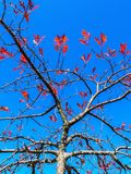 Tree in autumn with few red leaves.  stock image