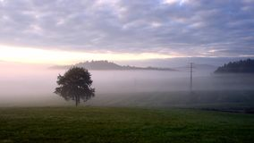 Tree and autumn fog in the landscape. Czech Republic stock footage