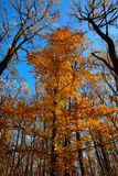 Tree in the autumn forest Stock Photos