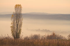 Tree and Autumn Inversion Stock Image