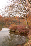 Tree in autumn on a lake Royalty Free Stock Image