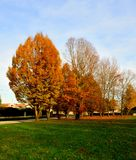 Tree of autumn royalty free stock images