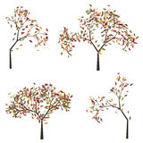 Tree with Autumn Leafage. Orange, red and yellow colors leaves, autumn tree Stock Photo