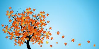 tree with autumn leaves Royalty Free Stock Photography