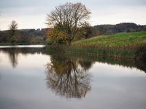 Tree with autumn leaves reflected in a lake, Ripley, North Yorkshire, UK. Trees with autumn leaves reflected on the surface of a lake at Ripley Castle, North royalty free stock photos