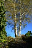 Tree in autumn Royalty Free Stock Photos