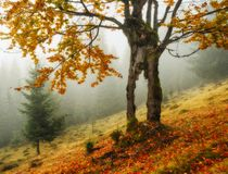 Autumn morning. Misty dawn in the Carpathians Stock Image