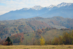Tree in autumn mountain Stock Photo