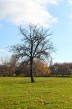 Tree in autumn park. Tree in Kolomenskoye park on sunny autumn day,russian church on the background halftone image Stock Photo